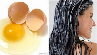 Manfaat Putih Telur Untuk Rambut