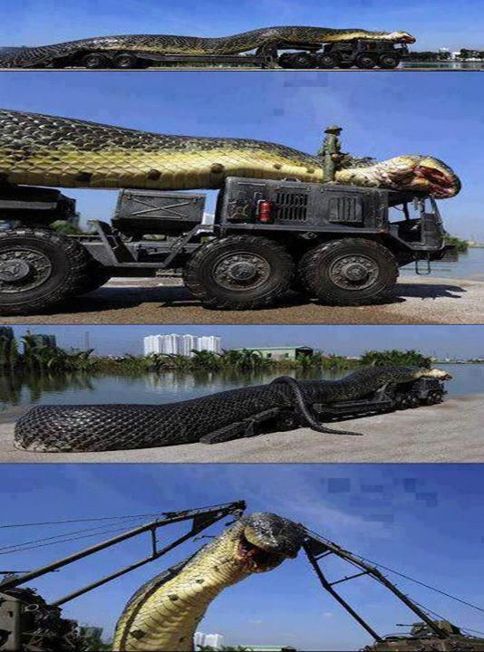 monster snake caught in egypt