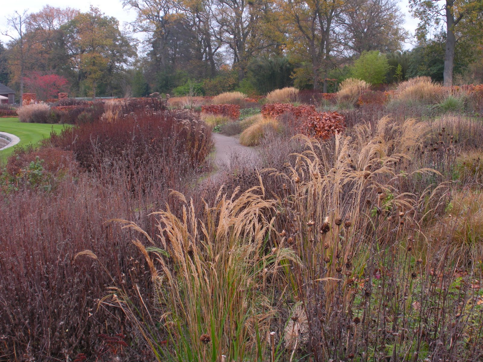 1000 images about wild grasses on pinterest grasses for Wild grass gardens