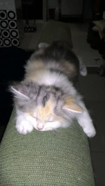 foto-kucing-imut_04