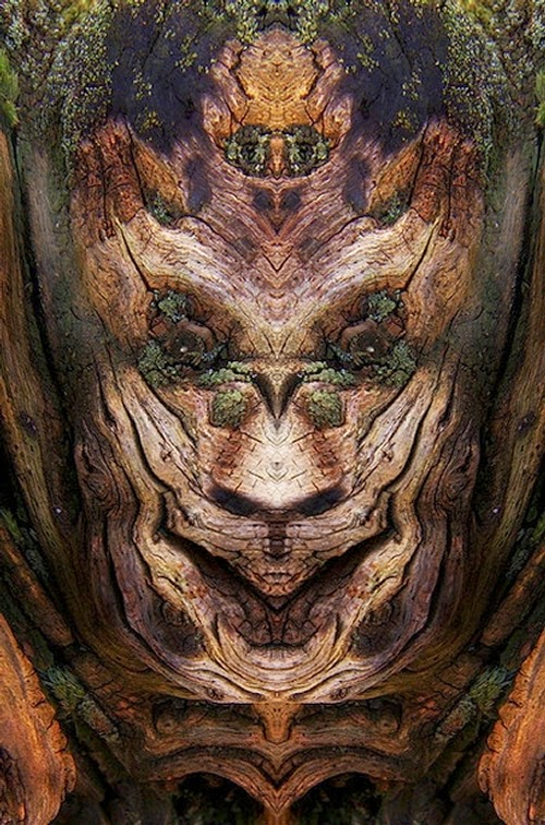 02-Elido-Turco-Mirrored-Faces-in-Tree-Photography-www-designstack-co