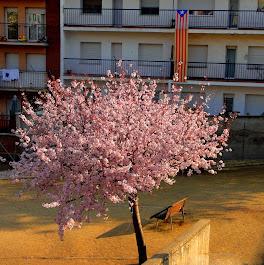 Esclat de la Primavera