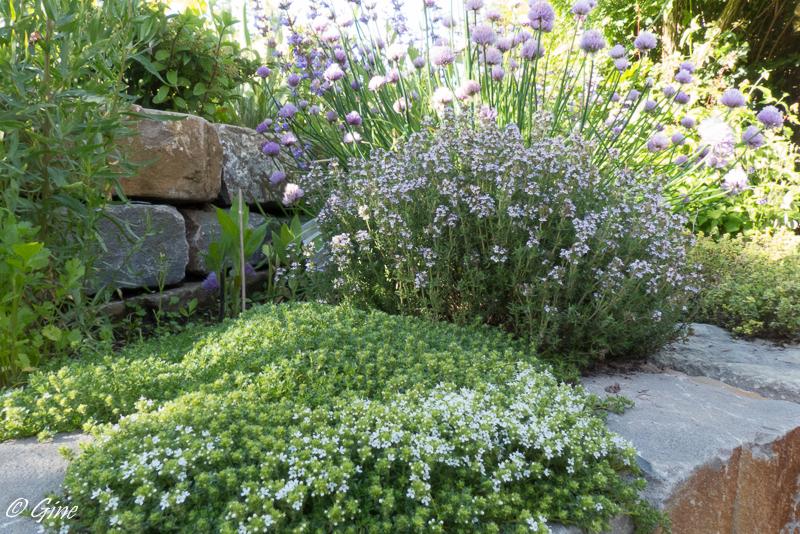 Au jardin de gine en juin au jardin for Jardin stereo 2015 line up