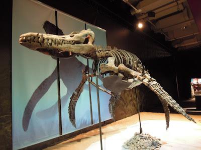 Esqueleto de Liopleurodon