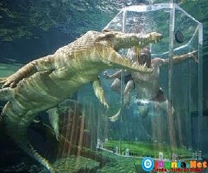 hewan-laut-paling-mematikan-didunia