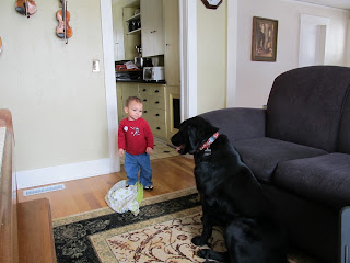Bean looking at our 80 pound black lab in our living room