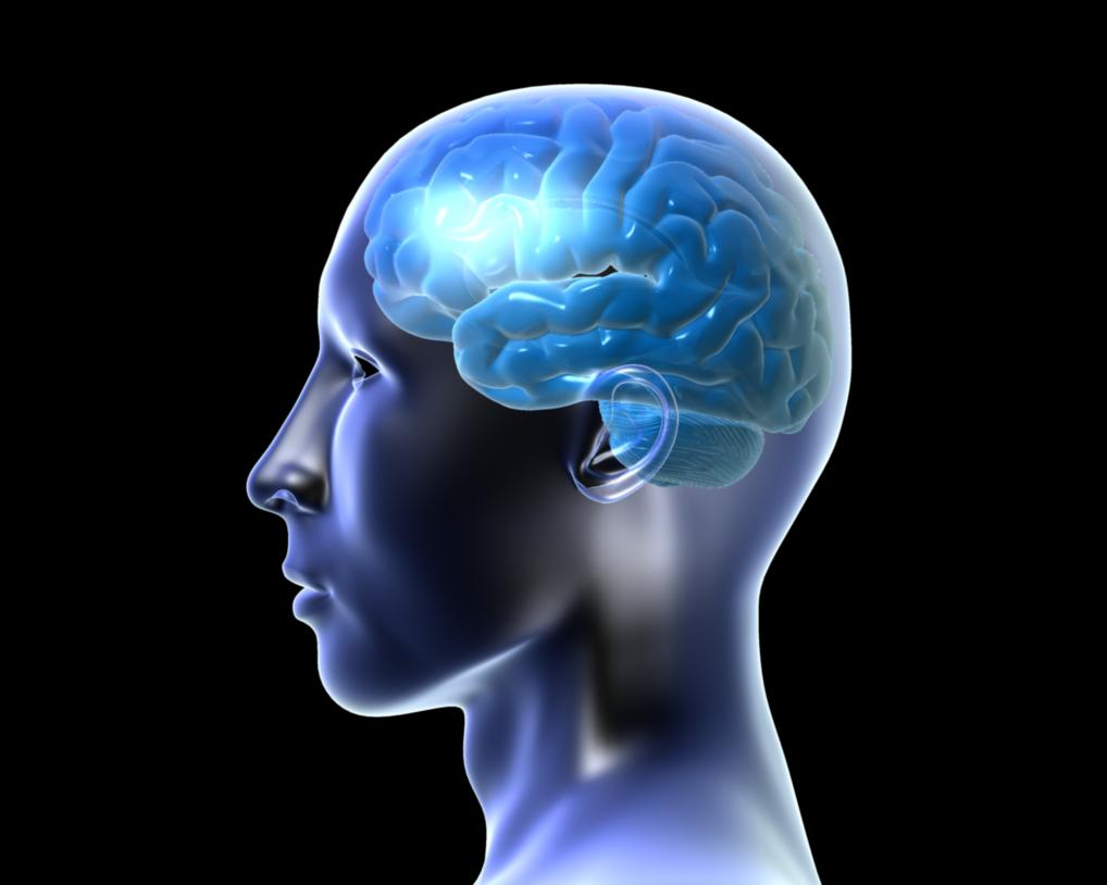 Facts about the brain slides uk