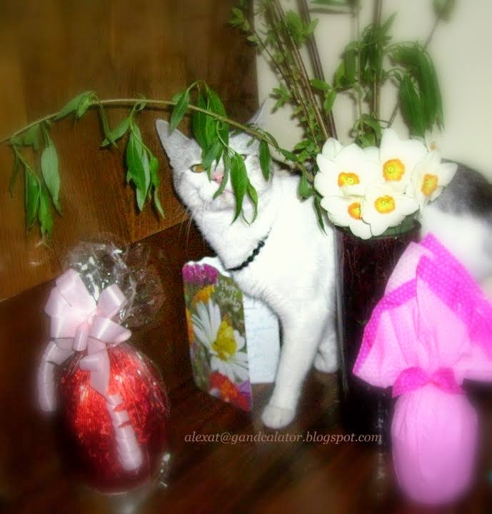 Paste/Easter 2012;  Chocolate eggs, willow and white daffodils.