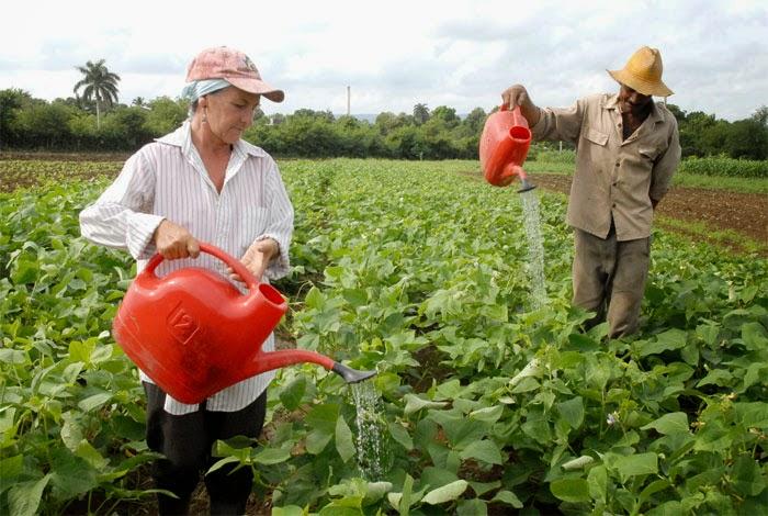Agricultura Urbana en Guantánamo