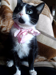 My cat ;)