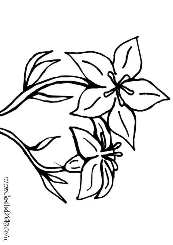 lily coloring book pages - photo#33