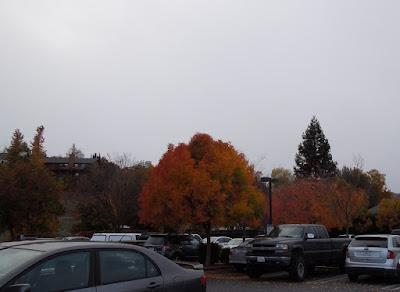 Autumn Leaves in Parking Lot, © B. Radisavljevic