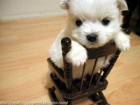 Cute white puppy.