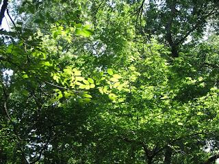солнечная листва