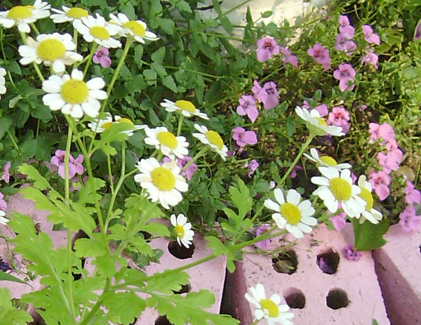 ♥  My Beloved Garden  ♥  ~  all in shades of pink, green, and white  ~click for more photos