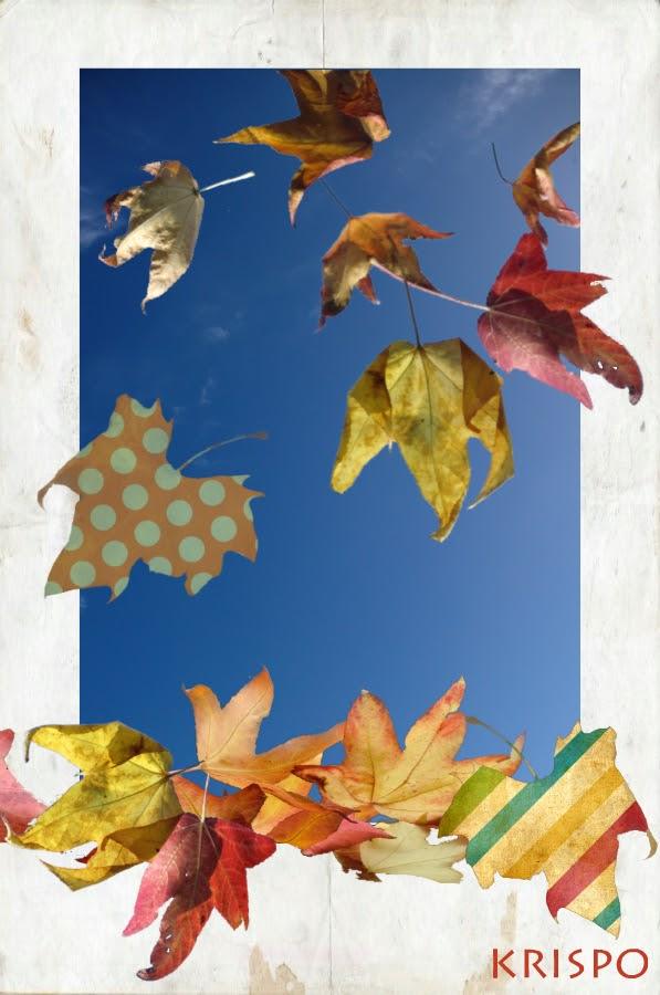 hojas cayendo de cielo y atraviesan una ventana