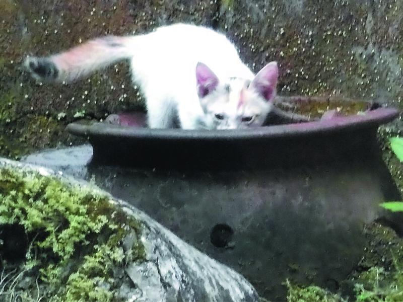 foto foto anak kucing lucu di luar jendela kamar kost gue