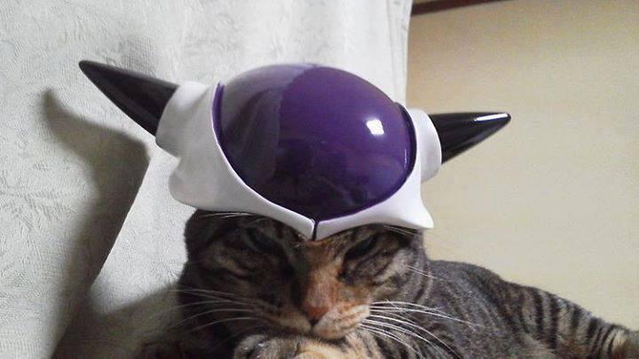 Сумасшедшие коты, фото 25