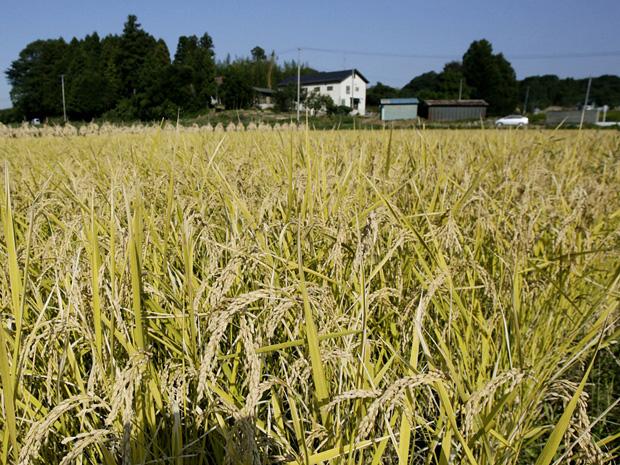 Cultivos-japon