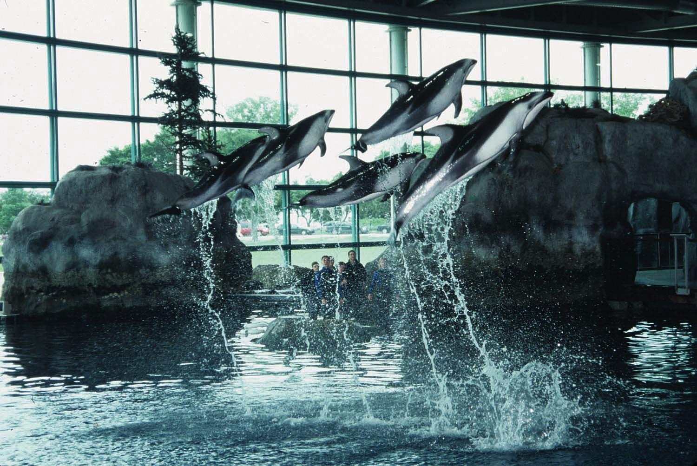 Shedd aquarium prices 2013