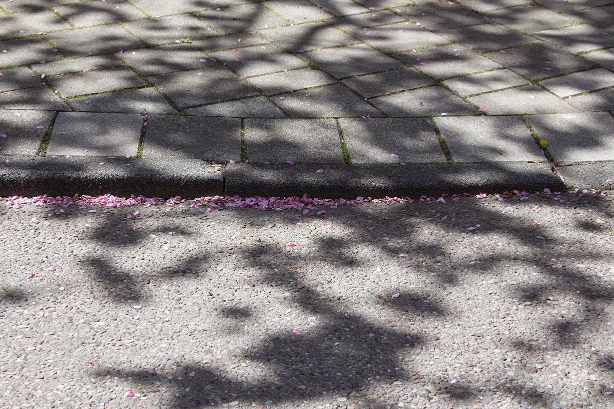 pink petals in the street