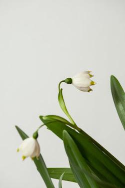 """""""Florile sint bijuteriile pamintului""""."""