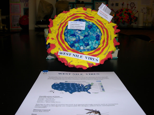 west nile virus essay Essay west nile virus commerce, human demographics and behavior, and technology and industry one emerging infectious disease that has been re-emerging is the west nile virus.