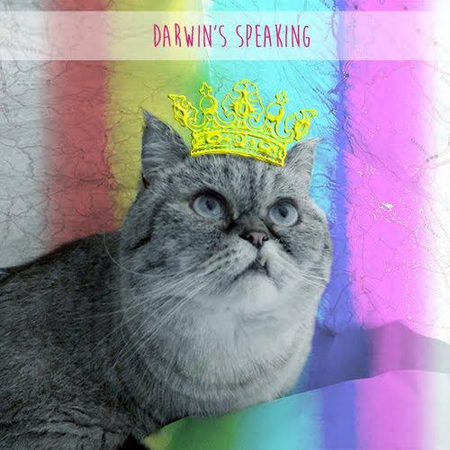 Darwin Le King