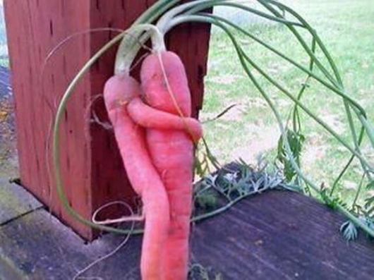 Sex and carrots