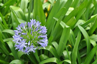Kwiat wśród traw