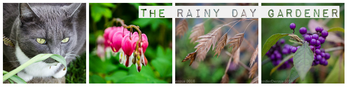 The Rainy Day Gardener
