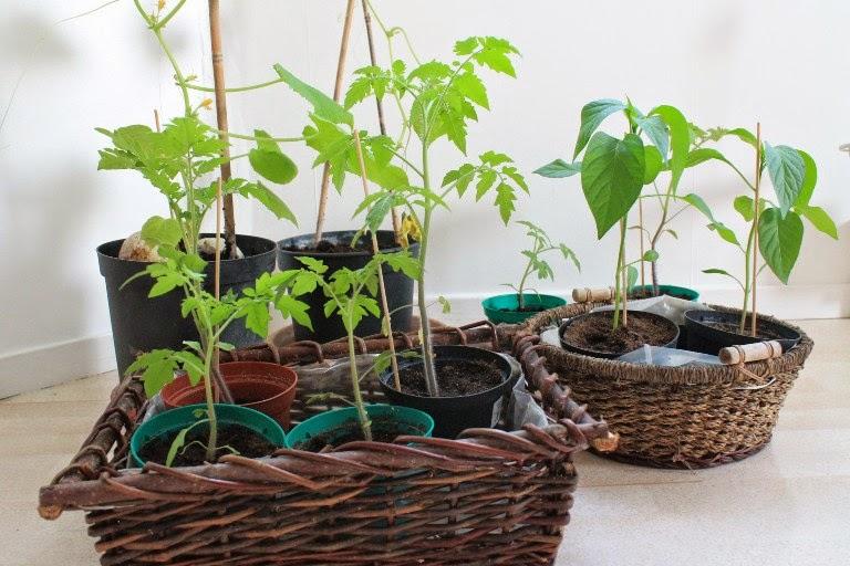 Cetrioli, peperoncini e pomodori