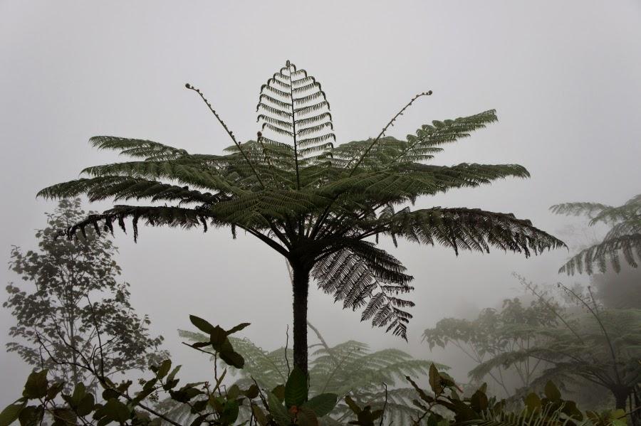 flotte billeder af palmer