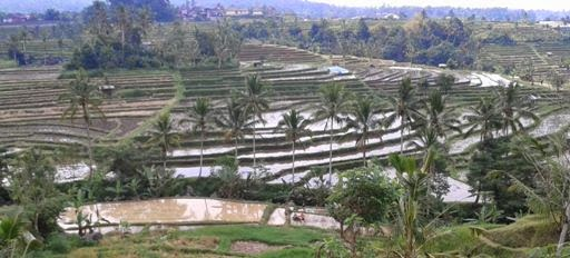 Methode of water irrigation system in Bali -  Bali, Attractions, Holiday, Tourist Object, Bali Interesting Places