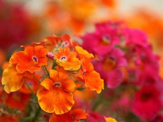 Flower desktop backgrounds