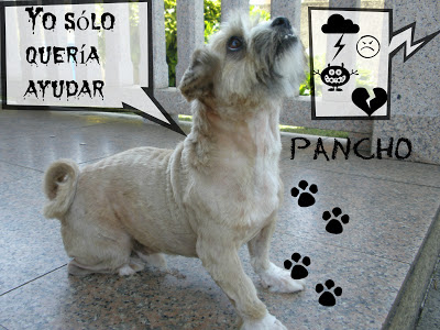 mi-perro-Pancho