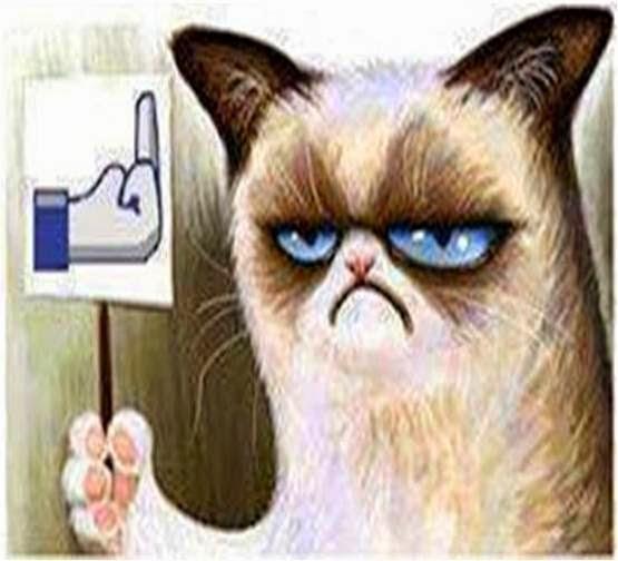 PONGA LO QUE USTED QUIERA - Página 3 Grumpy_cat_1