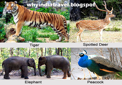 India Travel - Forests and national parks in Kerala
