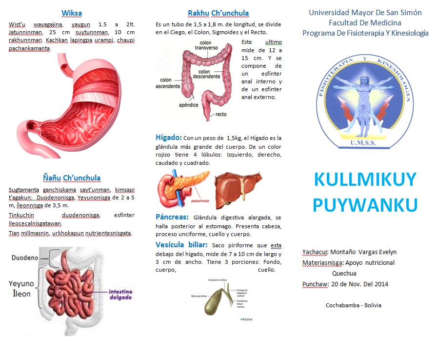 Sistema digestivo Anatomia | Nutri-2