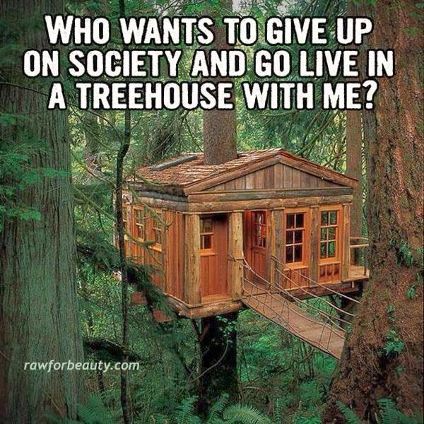 Living Wood Tree House All That Spam Go Live In A Tree House With Me