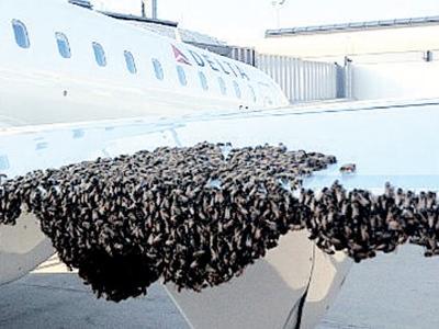 Beribu lebah mengerumuni sayap pesawat Delta.
