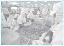 Industri pengepakan udang merupakan bentuk rumah tangga produksi. Sumber: Tempo Edisi, 14-20 Agustus 2006.