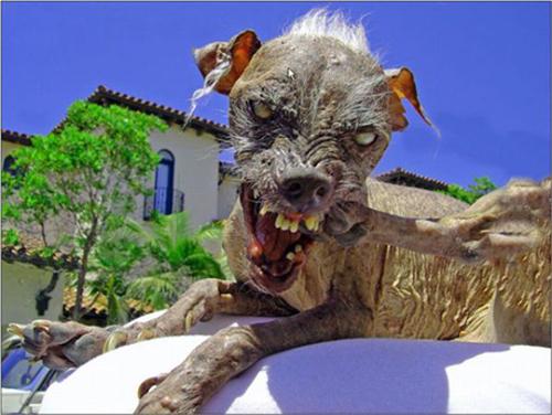 Fotos con perros en situaciones muy graciosas y divertidas