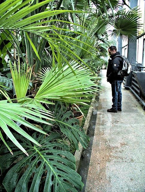 palmieri gradina botanica iasi