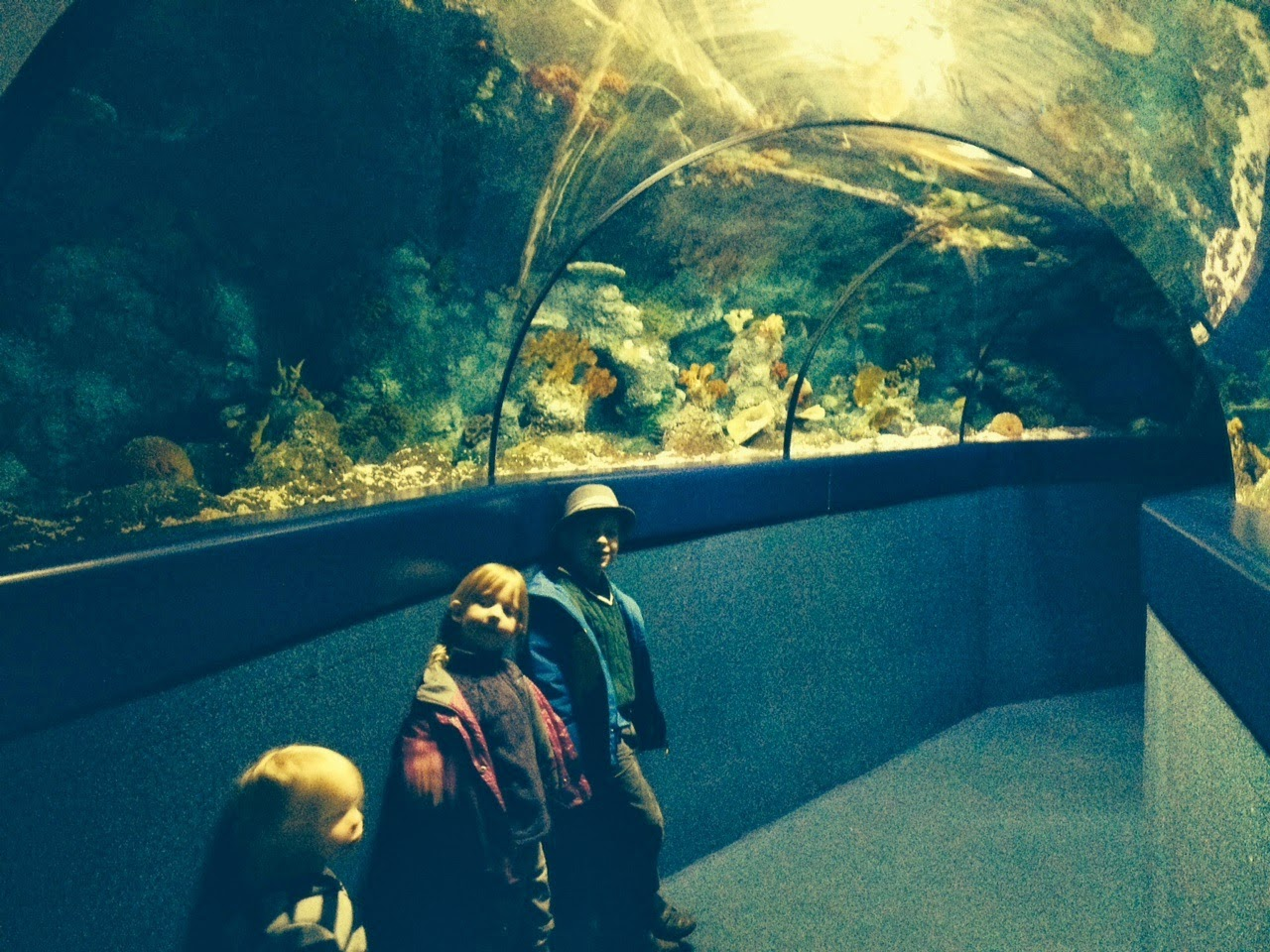 Bristol Aquarium for kids