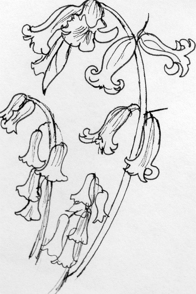 Bell Flowers Drawing Drawing Bluebell Flower