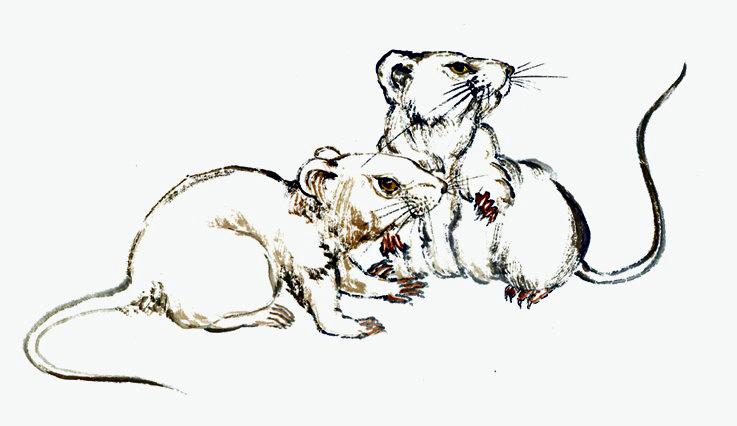 Ramalan Shio Tikus Hari Ini November 2014#