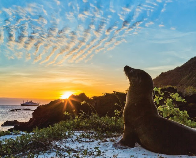 Lindblad Expeditions will have a new ship in the Galapagos Islands. Credit Ralph Lee Hopkins/Lindblad Expeditions