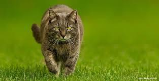 Gatos e a Espiritualidade