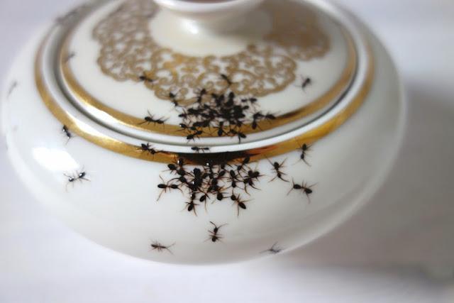 Platos de porcelana de época cubiertos en hordas de hormigas pintadas a mano